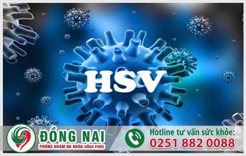 Virus HSV là bệnh gì?